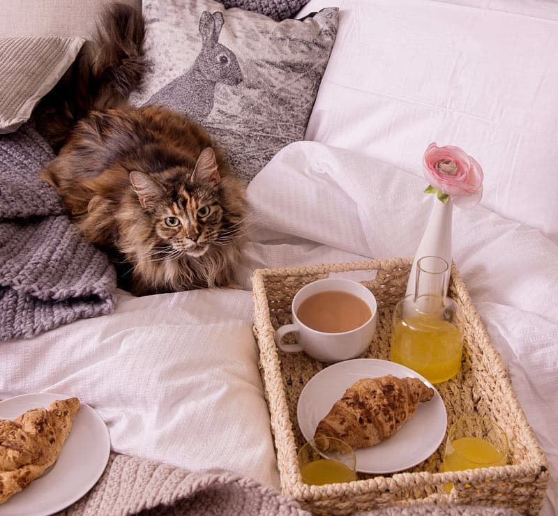 Cat and a breakfast tray on a bed