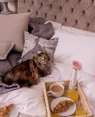 cat-and-breakfast-in-bed.jpg