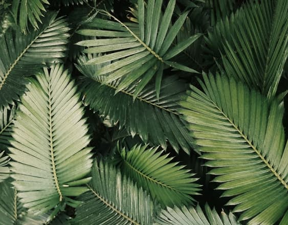 A pile of palm leaves.